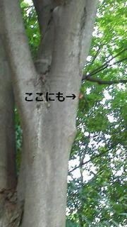 せみの殻.jpg