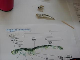 にぼし3.JPG